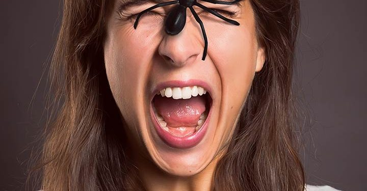 Spider Bites: How to Treat Spider Bites and Pictures of Spider Bites