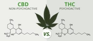 cbd vs hemp